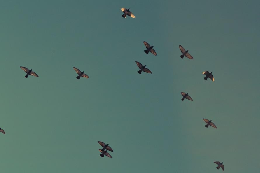 sky-flying-animals-birds-large